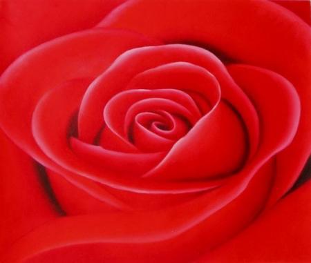 obraz Květ růže