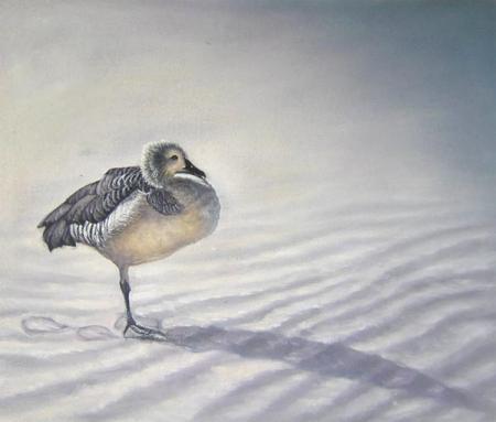 obraz Ptáček na poušti