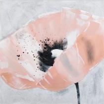 Obrazy květin - Růžový vlčí mák, obrazy ručně malované
