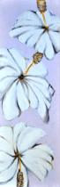 Obrazy květin - Bílé květy, obrazy ručně malované