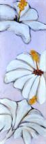 Obrazy květin - Bílé květy 2, obrazy ručně malované