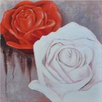 Obrazy květin - Bílá a červená růže 2, obrazy ručně malované