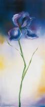 obrazy, reprodukce, Iris