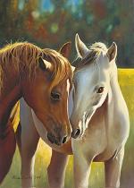 obrazy, reprodukce, Dva kone - portrét - portrét