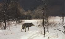 bestseler: Hviezdna noc. Vlk