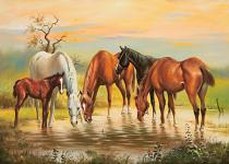 obrazy, reprodukce, Koně u vody