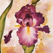 obrazy, reprodukce, Iris - Kosatec 2ZD