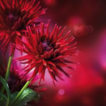 obrazy, reprodukce, Dahlia Autumn flower design 3