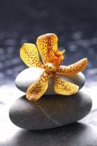 obrazy, reprodukce, Flower 2