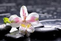 obrazy, reprodukce, Flower 3
