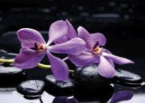 obrazy, reprodukce, Flower 5