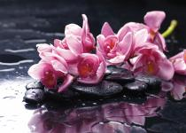 obrazy, reprodukce, Flower 6