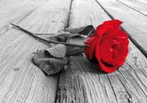 bestseler: Červená růže