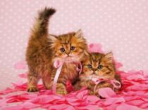 obrazy, reprodukce, Dvě kočky