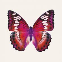 obrazy, reprodukce, Motýl 2