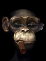 obrazy, reprodukce, Opice