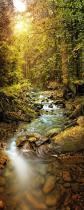 obrazy, reprodukce, Potok v lese
