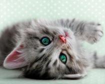 obrazy, reprodukce, Šedé koťátko