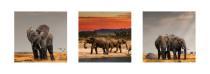obrazy, reprodukce, Trio - sloni