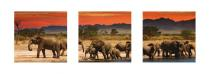 obrazy, reprodukce, Trio - sloni u vody