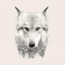 obrazy, reprodukce, Vlk 1