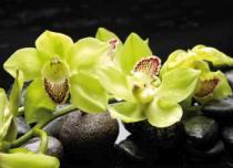 obrazy, reprodukce, Žlutá orchidej 10