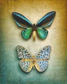 obrazy, reprodukce, Dva motýli
