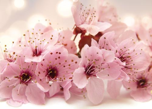 obraz Branch of flower