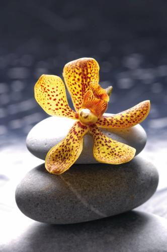 obraz Flower 2