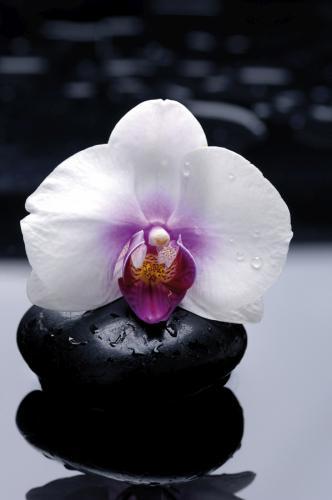 obraz Flower 4