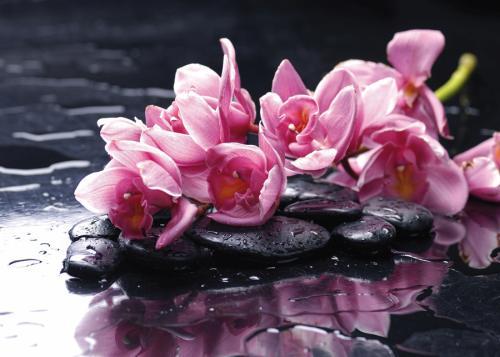 obraz Flower 6