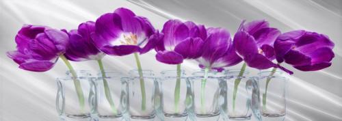 obraz Fialové tulipány