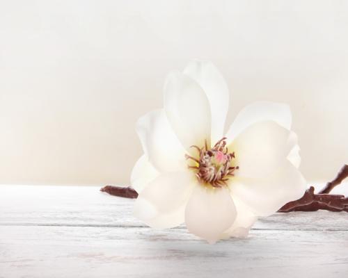 obraz Flower 11
