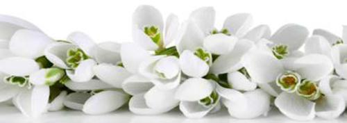 obraz Květiny 9