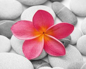 obraz Flower and stone 3