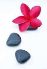obraz Flower and stone 7