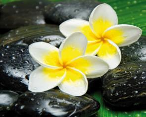obraz Flower and stone 8