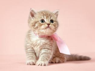 obraz Koťátko na růžovém pozadí