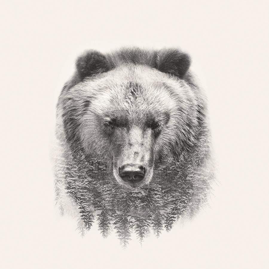 obraz Medvěd 2