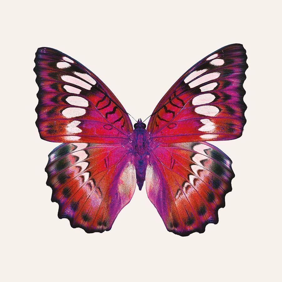 obraz Motýl 2