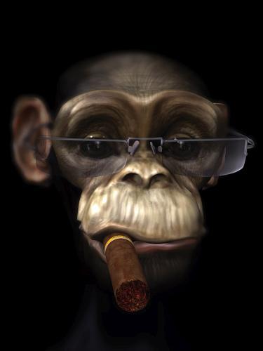 obraz Opice