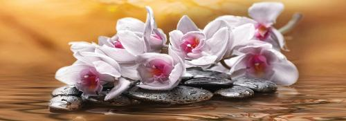 obraz Orchideje 7