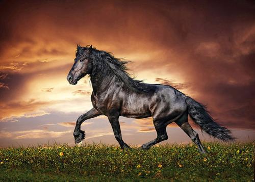 obraz Osamělý kůň