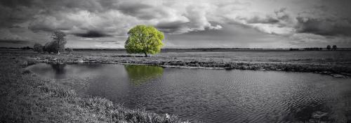 obraz Osamělý strom