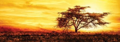 obraz Strom