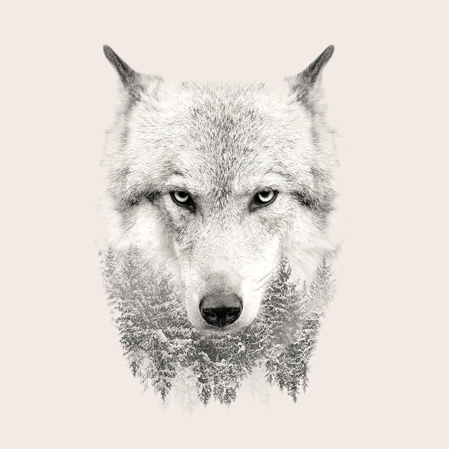 obraz Vlk 1