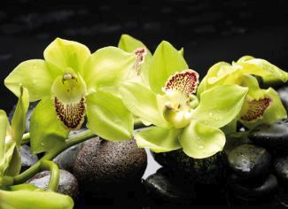 obraz Žlutá orchidej 10