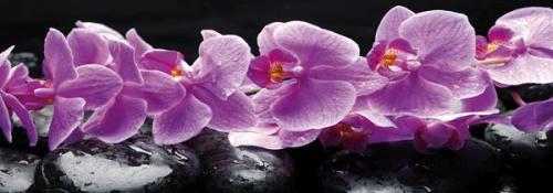 obraz Fialové orchideje