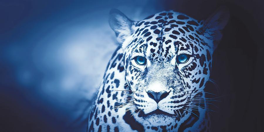 obraz Leopard 2