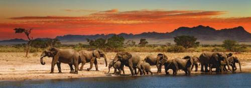 obraz Sloni u vody
